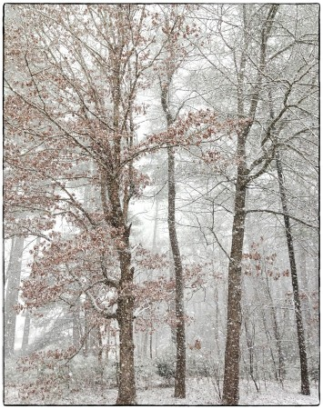 Snow falling on trees.