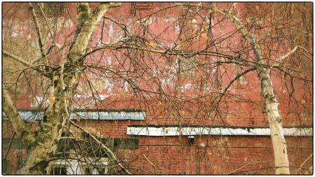 Brick wall and bare trees.