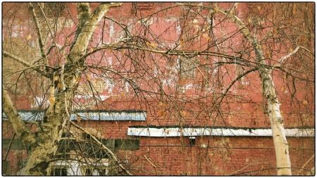 Brick wall and bare trees.