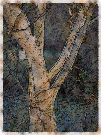 Watercolor style image of tree trunks.