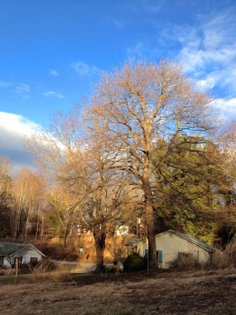 Late afternoon light on winter trees.