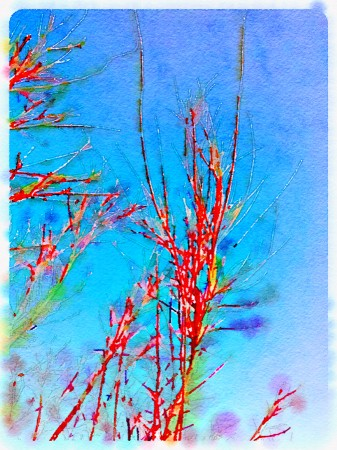 Watercolorish rendition of tree twigs.