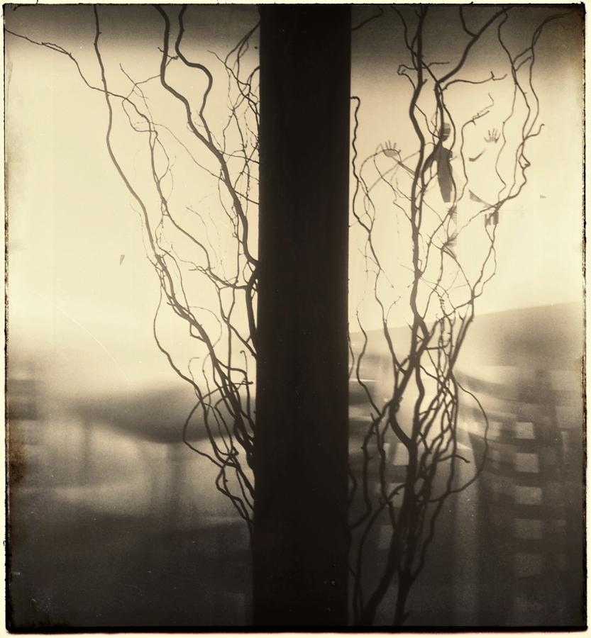 Window silhouettes.