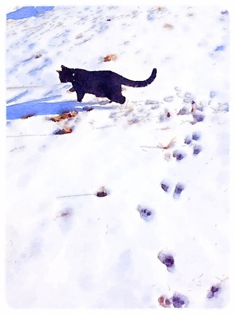 Watercolor-effect image of cat in snow with footprints.
