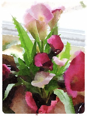 Watercolor effect image of calla lilies.
