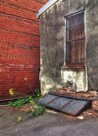 Brick Wall, storage area, flowers, grate.