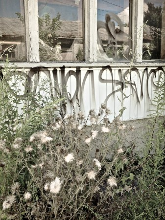 Weeds and graffiti, Asheville, NC