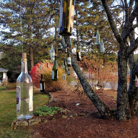 Wine bottles hanging from a winery tree.