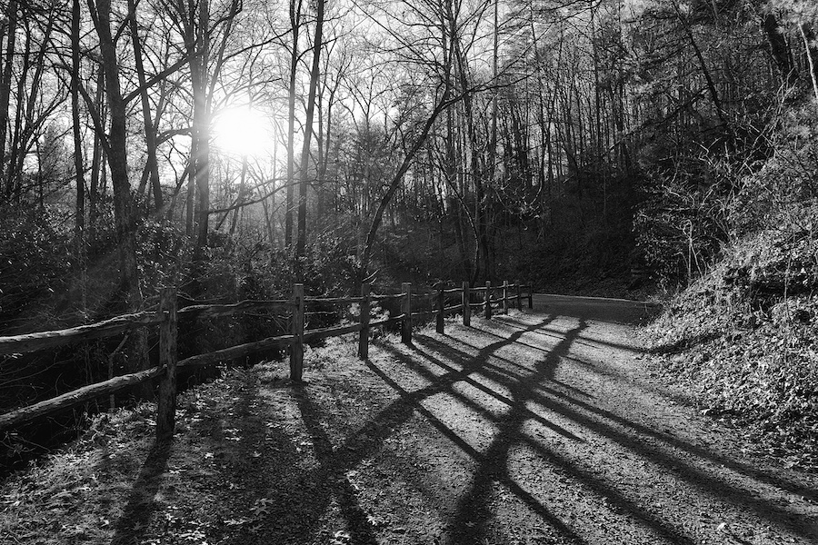 Black & white image of gravel road, wood fence, winter trees, sun flare.